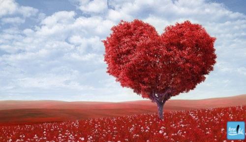 14 Şubat Sevgililer Günü-Sevgililer günü ne kadar popüler-Sevgililer gününü kutlama nedenlerimiz-Sevgililer gününde fiyatlar